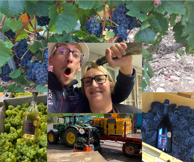 Collage Vendanges